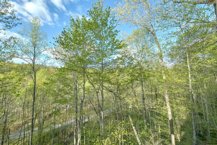 2 bedroom cabin with wooded view of mountains - A Bear Endeavor
